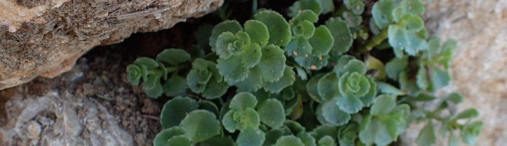 La feixa pedra seca   (artesania amb pedra seca)